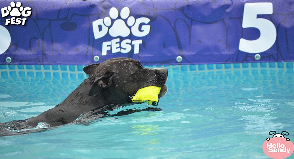 Super zoo DOGFEST 2021